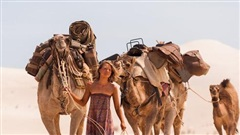 Bị chủ đem bán, lạc đà trung thành vượt 100 km tìm đường trở về nhà