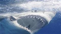 Người cha dũng cảm cứu con trai thoát chết khi bị cá mập khổng lồ tấn công