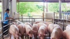 Bộ Nông nghiệp 'bêu tên' nhiều doanh nghiệp không phối hợp giảm giá thịt heo