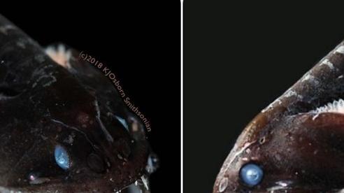 Giải mã bí ẩn: Loài cá 'đen' bậc nhất hành tinh