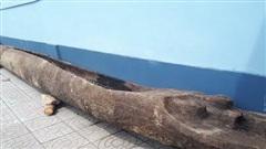 Đi đánh cá, phát hiện 2 thuyền độc mộc cổ vùi lấp dưới lòng sông