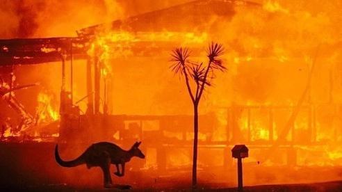 Australia: Nhiều loài sinh vật bản địa có nguy cơ tuyệt chủng do cháy rừng