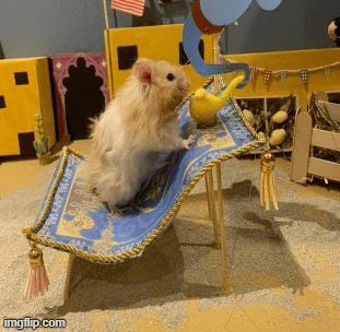 Chân dung người phụ nữ 52 tuổi tỉ mỉ xây nhà sân vườn cho chuột