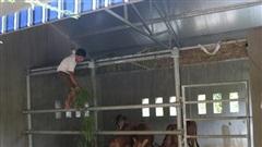 Choáng ngợp những chuồng bò khang trang có tổng trị giá hơn chục tỷ đồng ở Nghệ An
