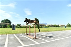 Chó nghiệp vụ biên phòng sẽ lần đầu tranh tài tại Army Games 2020