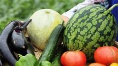 Hà Nội thúc đẩy sản xuất và tiêu thụ sản phẩm nông nghiệp hữu cơ