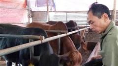 Dịch bệnh gia súc, gia cầm tại Hà Nội cơ bản được kiểm soát