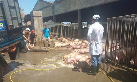 Phát hiện xe tải chở 80 con heo chết từ Bình Dương ra Huế