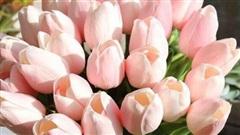 Những loại hoa 'không nên' rước vào nhà kẻo ảnh hưởng sức khỏe, tài lộc