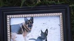 Chú chó đầu tiên dương tính với COVID-19 ở Mỹ đã chết