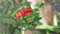 Nấu canh với thứ lá thẫm đẫm vị tuổi thơ, cả nồi cơm hết bay không còn 1 hạt