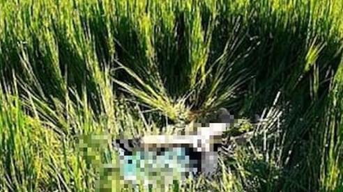 Tin tai nạn giao thông mới nhất ngày 1/8/2020: Hé lộ nguyên nhân vụ thi thể người đàn ông dưới ruộng lúa