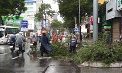 Thêm cây xanh bật gốc khi trời mưa tại TPHCM