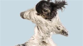 10 khoảnh khắc hài hước của những chú chó khi 'bay' giữa không trung