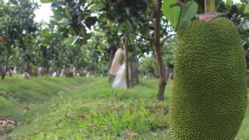 Công ty bầu Đức lãi hơn nghìn tỷ từ bán trái cây