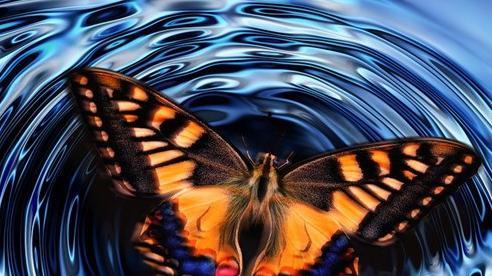 'Hiệu ứng cánh bướm' là sai, các nhà khoa học đã chứng minh được điều này ở cấp độ lượng tử