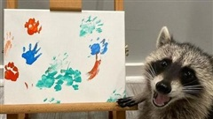 Hi hữu gấu mèo 'khởi nghiệp' bán tranh vẽ tay gây bão