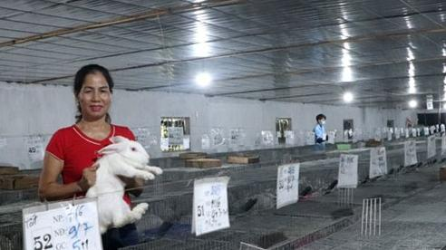 Lãi lớn nhờ nuôi thỏ