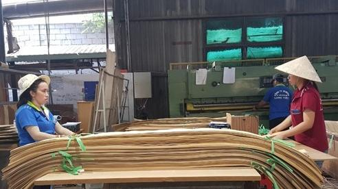 Không dung túng DN phá giá gỗ ván dán