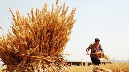 Trung Quốc phủ nhận việc đối mặt nguy cơ mất an ninh lương thực sau hàng loạt thảm họa