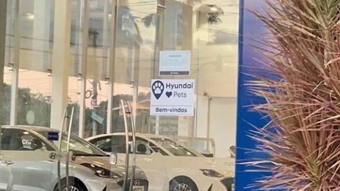 Chú chó đi lạc trở thành nhân viên hãng xe ô tô ở Brazil