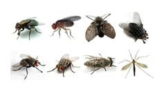 Giá kể mà không có ruồi…