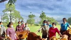 Xã Hà Vinh (Thanh Hóa): Trao bò sinh sản cho phụ nữ hộ nghèo, cận nghèo