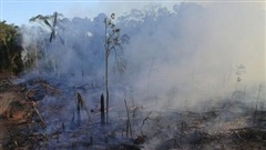 Amazon hoang tàn bởi cháy rừng