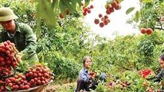 Chuyển đổi số nông nghiệp - Cầu nối giữa nông dân và người dùng