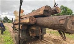 Gặp tổ tuần tra, lâm tặc tẩu thoát bỏ lại hàng trăm lóng, hộp gỗ
