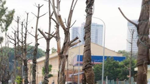 Tin nóng đầu ngày 15/8: Hàng trăm cây xanh tiếp tục 'đột tử' trên con đường mới mở ở Hà Nội