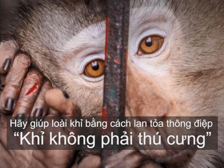 Ra mắt phim 'Khỉ không phải thú cưng' kêu gọi chấm dứt nạn nuôi nhốt
