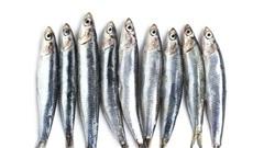 Vi nhựa được tìm thấy trong nhiều mẫu hải sản