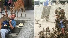 10 điểm đến thú vị nơi động vật vây quanh du khách để xin ăn