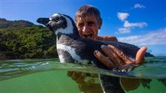 Những sự thật giật mình về loài cánh cụt dễ thương: Yêu thì hết mình và vô cùng tình nghĩa nhưng một khi đã ghen thì sẵn sàng 'khô máu'