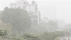 Ô nhiễm kim loại nặng trong không khí: Khi rêu trở thành 'chứng nhân'