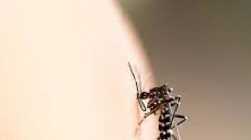 Mẹo trị vết muỗi đốt nhanh, hiệu quả cho trẻ