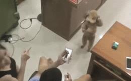 Chàng trai 'khóc dở mếu dở' khi bố mẹ hào hứng buộc nơ cho cún cưng, rồi lấy điện thoại quay lại