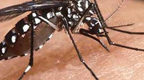 Cứu sống nhiều trẻ em mắc sốt xuất huyết Dengue nặng