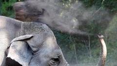 Tin tức đời sống mới nhất ngày 28/8/2020: Vườn thú cho voi dùng cần sa để giảm căng thẳng
