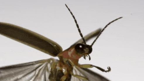 Nhà khoa học quay được khoảnh khắc slow-motion khi côn trùng cất cánh ở tốc độ 3.200fps