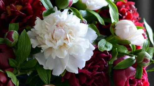 Những bông hoa rực rỡ trông vô cùng tươi tắn nhưng ẩn chứa sự thật gây choáng váng, nhỡ tay một chút là 'tan thành trăm mảnh'