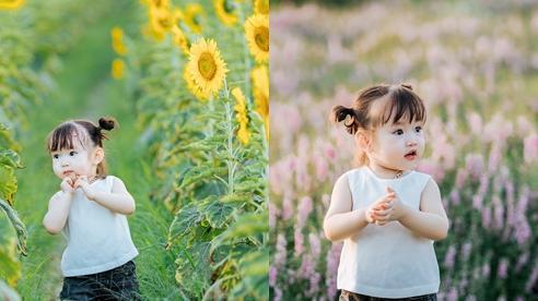 Lịm tim trước khoảnh khắc em bé 'xinh đẹp tựa thiên thần' giữa cánh đồng hoa hướng dương