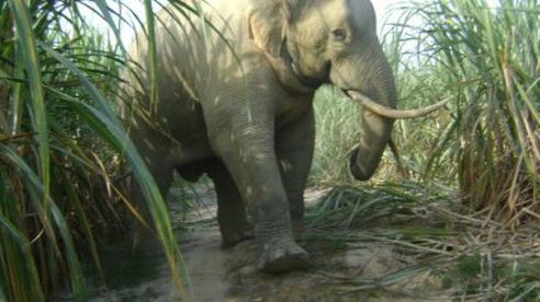 Một cá thể voi rừng đẻ con thành công tại Đồng Nai