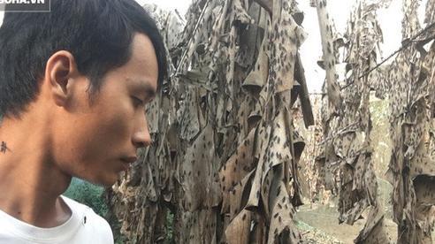 Bỏ nghề kỹ sư, chàng trai đi nuôi ruồi trong rừng: 'Tôi được làm việc mình thích, kiếm được tiền'