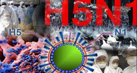 Cà Mau xuất hiện ổ dịch cúm gia cầm H5N1