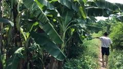 Vụ bé gái 12 tuổi bị hiếp dâm trong vườn chuối ở Hà Nội: Hàng xóm tiết lộ về 'yêu râu xanh'