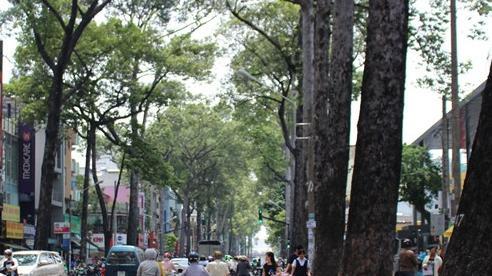 TP.HCM phòng chống cây xanh ngã đổ mùa mưa bão