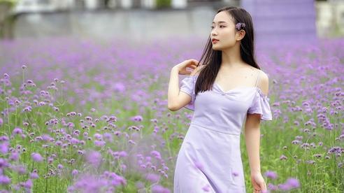 Điểm 'check-in' mới toanh tại cánh đồng hoa oải hương thảo tím ngắt nằm giữa trung tâm Hà Nội