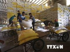 Phiên họp 48: Thống nhất bổ sung 274 tỷ đồng để mua bù 23.000 tấn gạo